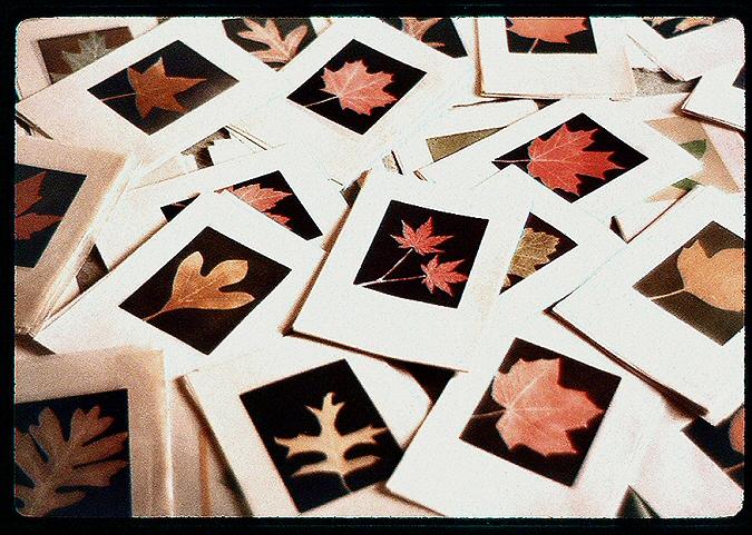 LeafPrints2