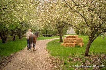 Pony_orchard_3